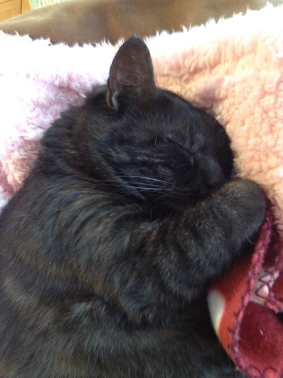 クーちゃんネコ 相変わらず爆睡
