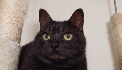 黒猫の命も大切だ