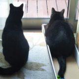 今日は猫の日🐱